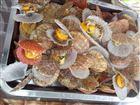 扇贝贝类自动蒸煮机专业生产厂家